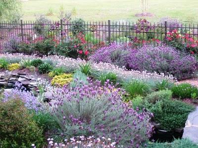 Садові декоративні рослини